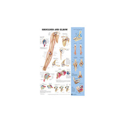 Shoulder & Elbow Chart Laminated